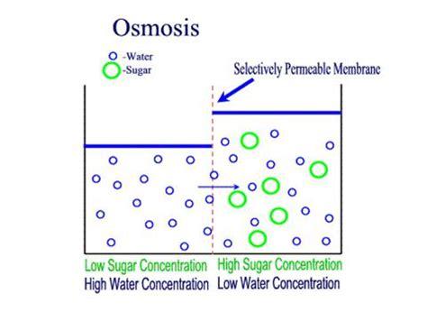 GCSE Biology - GCSE Biology Osmosis Coursework Potato and
